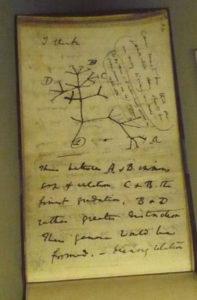 Taccuino di Charles Darwin