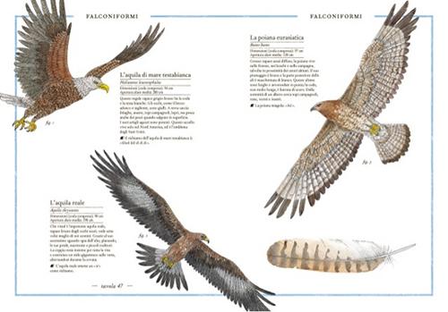 Inventario illustrato degli uccelli, Virginie Aladjidi, Emmanuelle Tchoukriel, L'Ippocampo, 2015