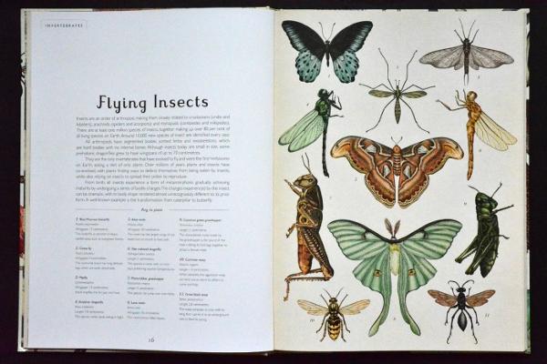 Illustrazione da Animalium