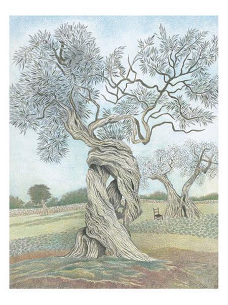 Raccontare gli alberi, P. Valentinis, M. Evangelista, Rizzoli