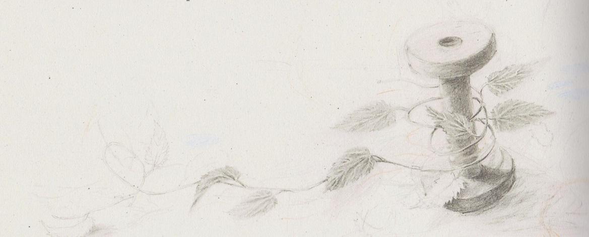 I cigni selvatici, Hans Christian Andersen, Joanna Concejo, trad. Maria Giacobbe, Topipittori, 2011, Milano