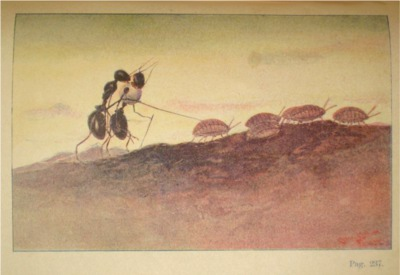 <em>Ciondolino</em>, Vamba. Ill. di Chiostri, 1856